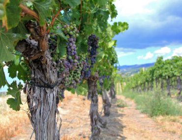 A Wine Tour of the Naramata Valley