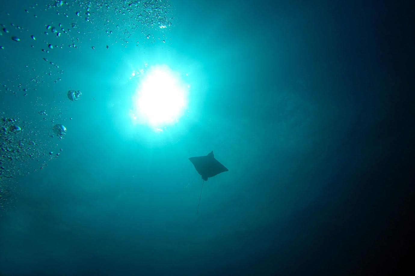 A spotted eagle ray silhouetted by the sun overhead
