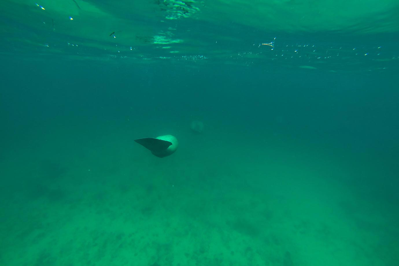 After sailing for about an hour, the first thing we came across while snorkelling were manatees