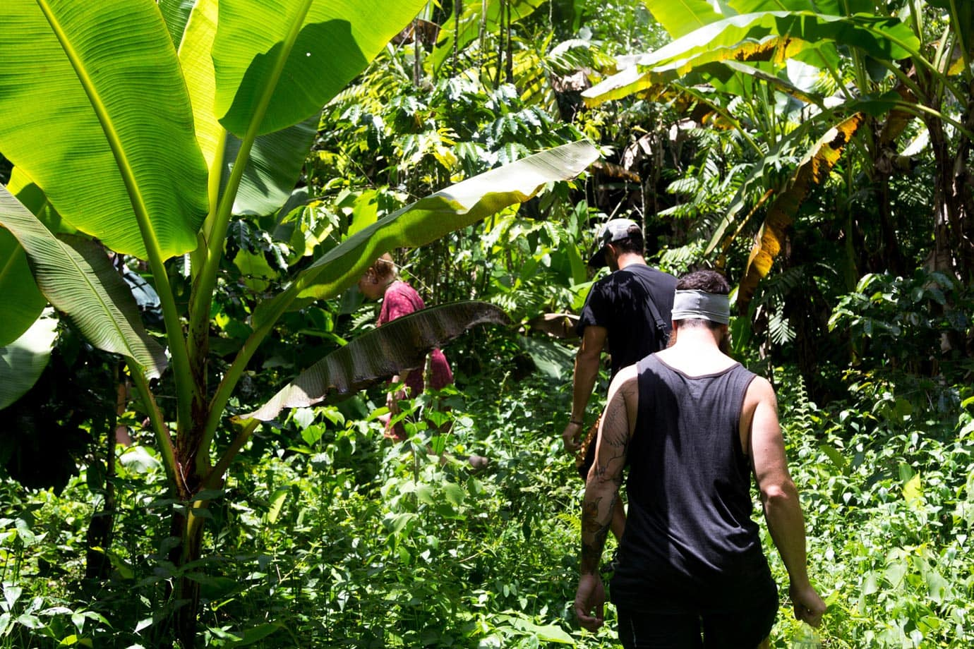 From the second waterfall to the third, we walked through a small coffee plantation