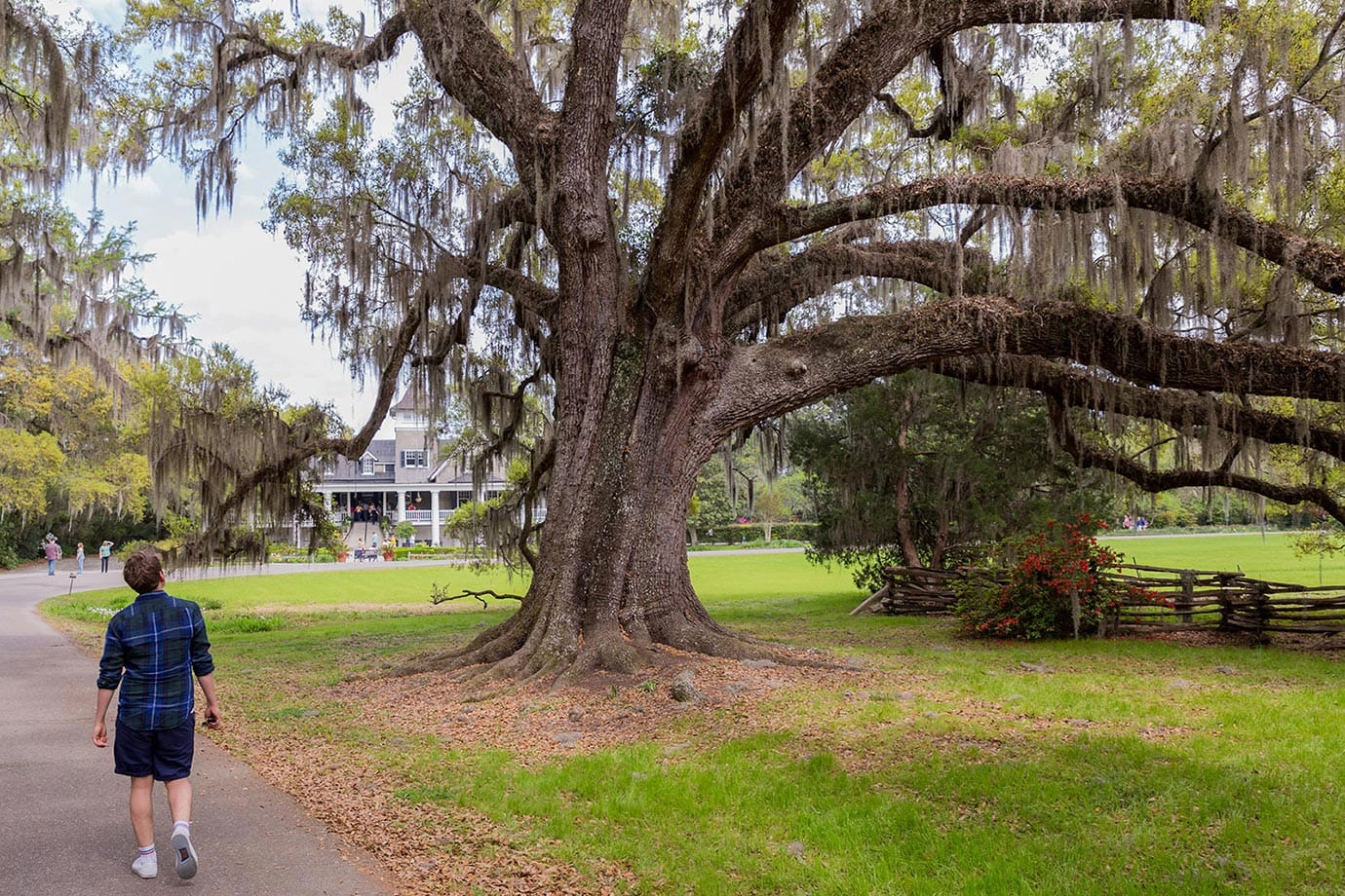 Plantation, Charleston