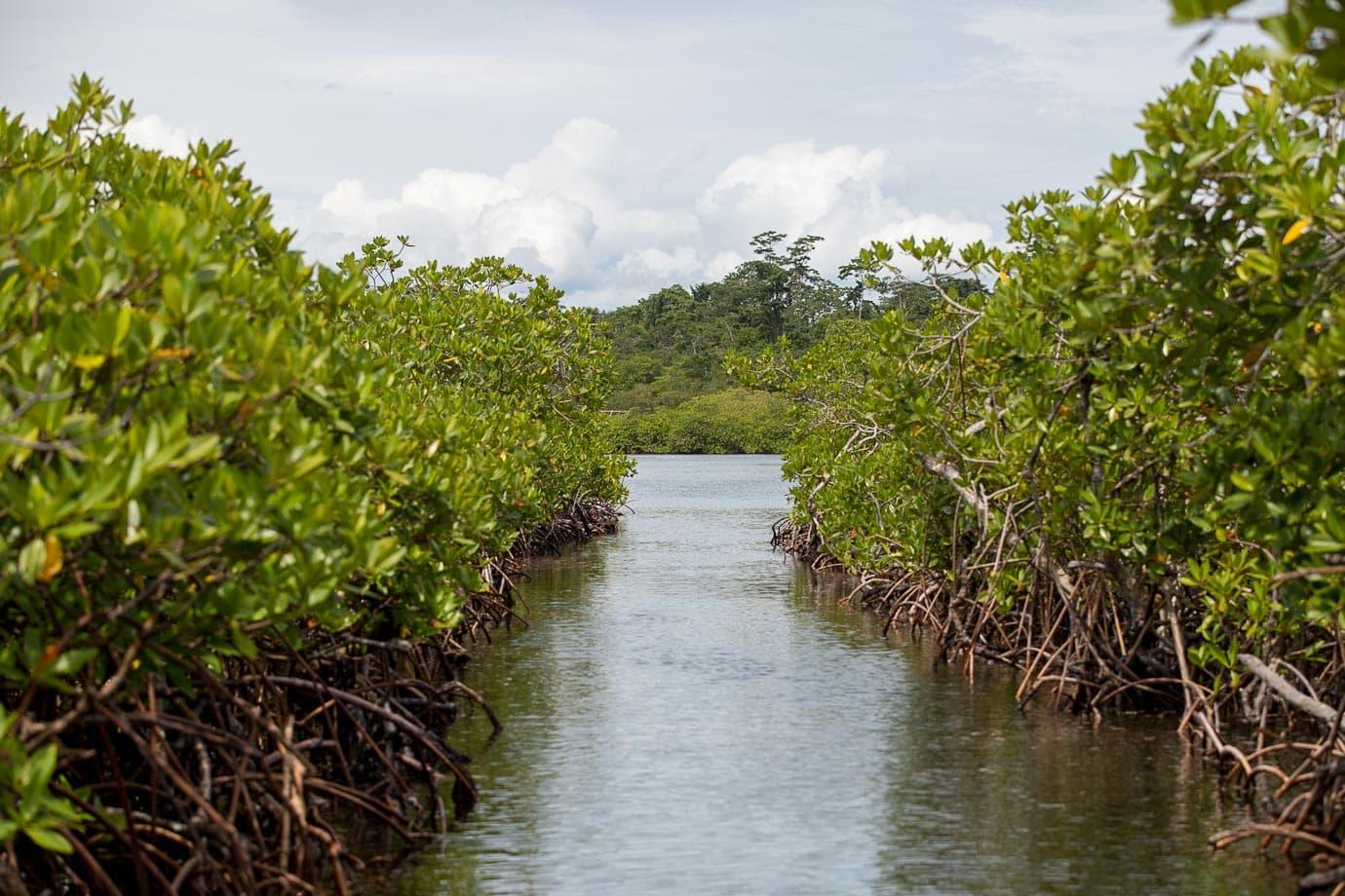 Mangroves at Bocas del Toro