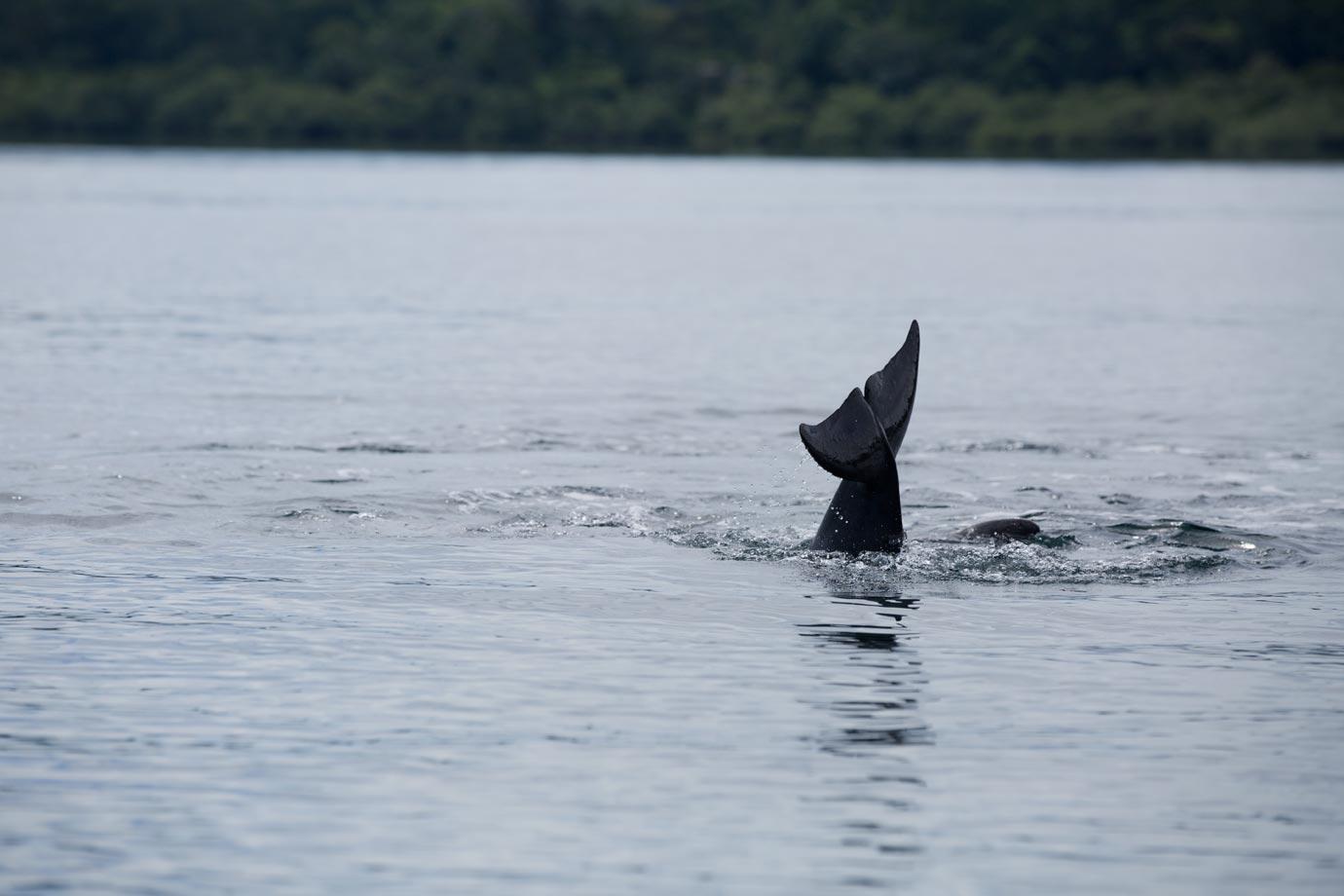 A few dolphin sightings - ©Brian Ceci