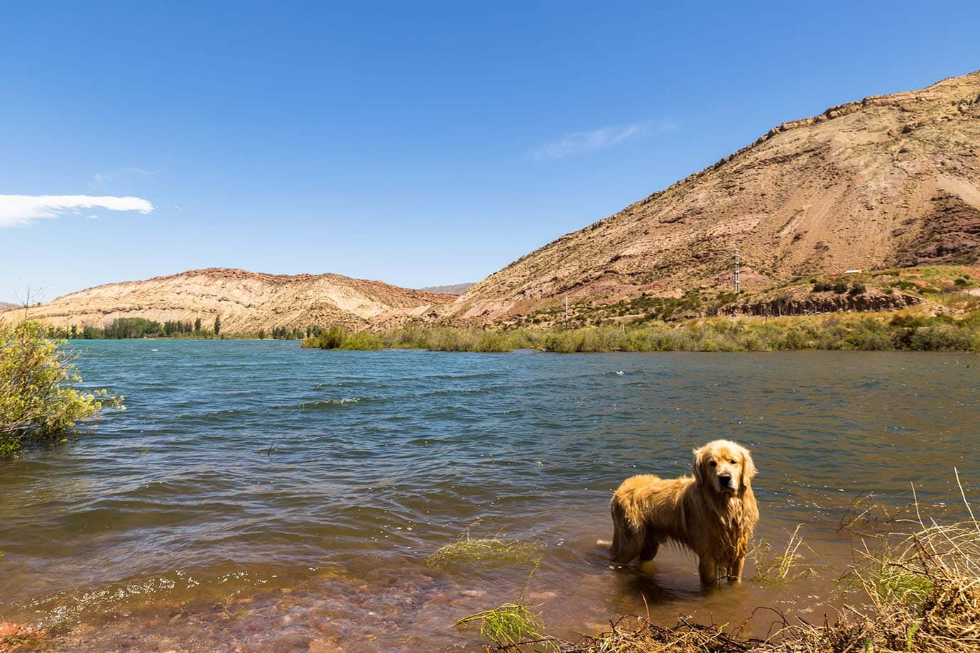 Dogs in lake, Argentina