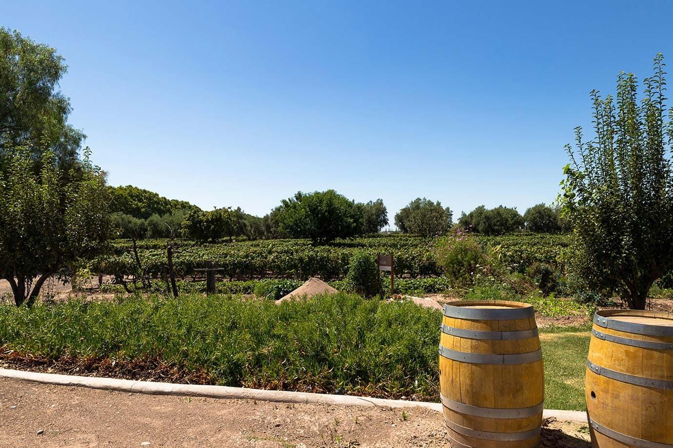 Restaurant Review: Bodega Lagarde, Mendoza