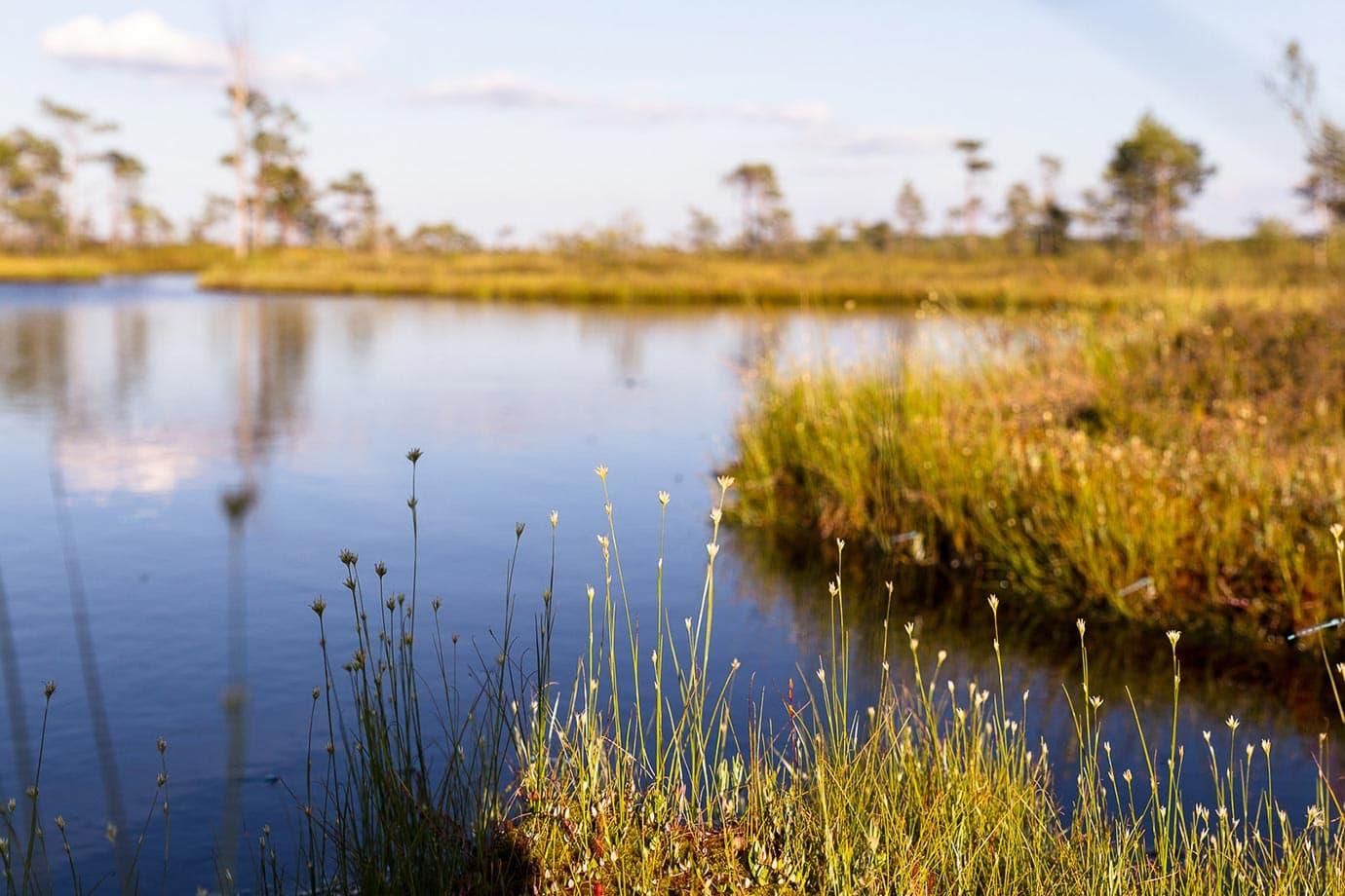 Landscape in Estonia