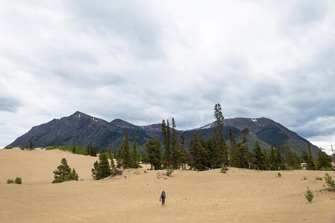 Carcross Desert, the Yukon