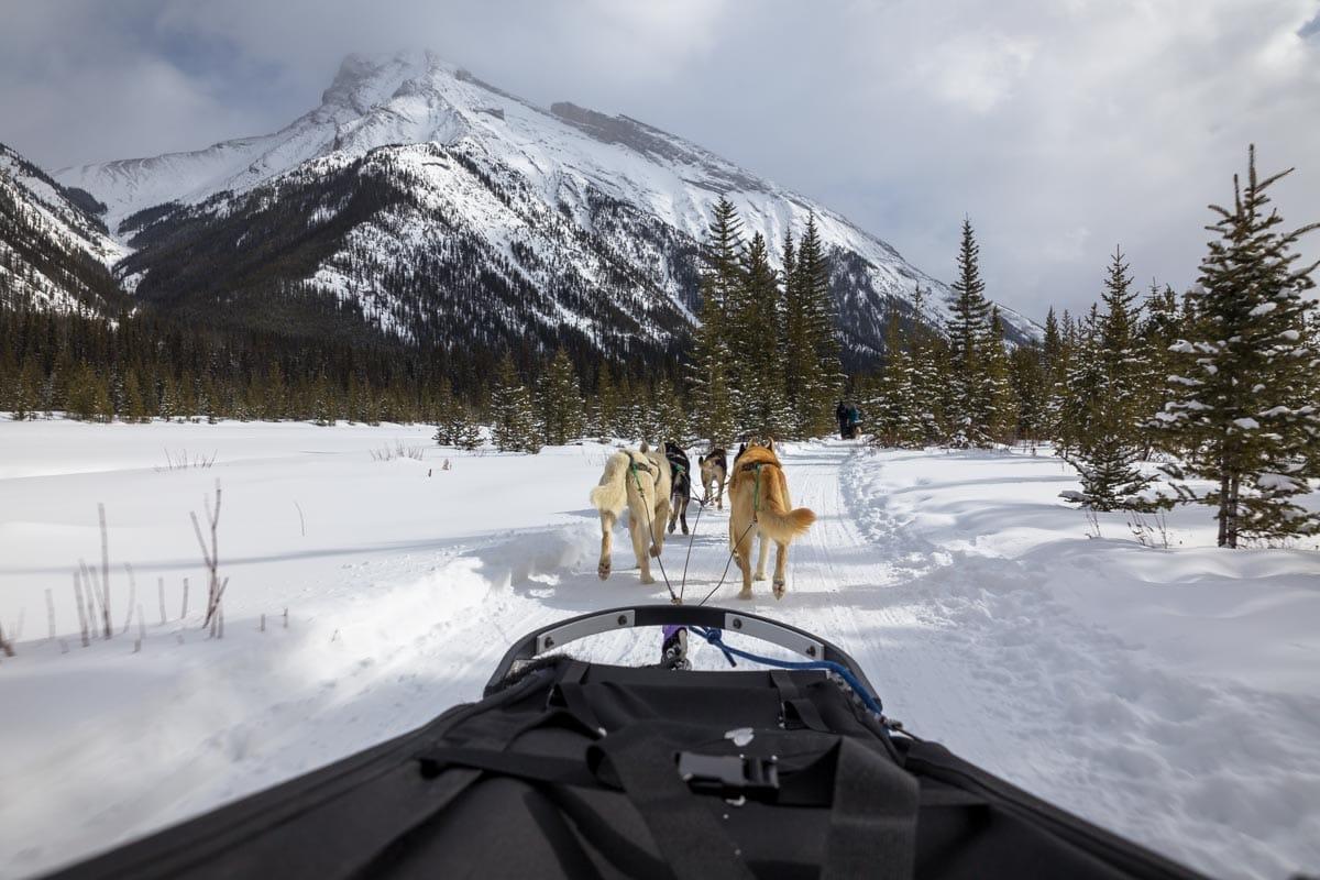 Dog sledding at Banff