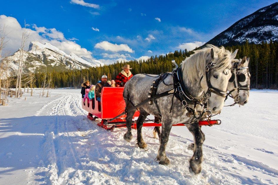horse sleigh ride banff