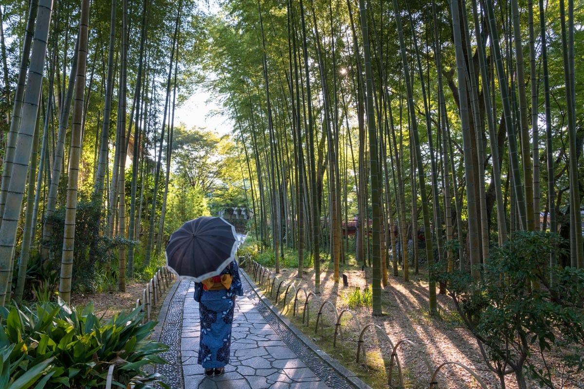 bamboo forest shuzenji