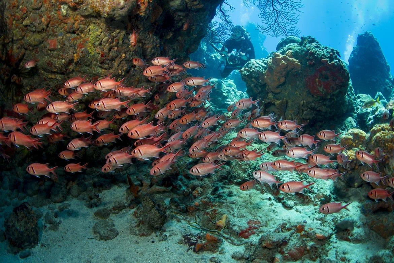 diving in dominica