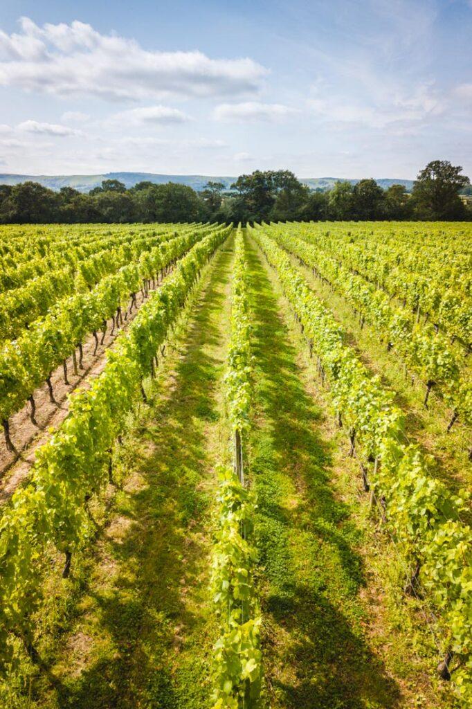 east sussex vineyards