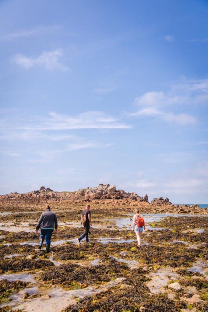 seaweed tour guernsey